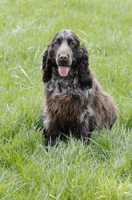 lucas vétérinaire erstein